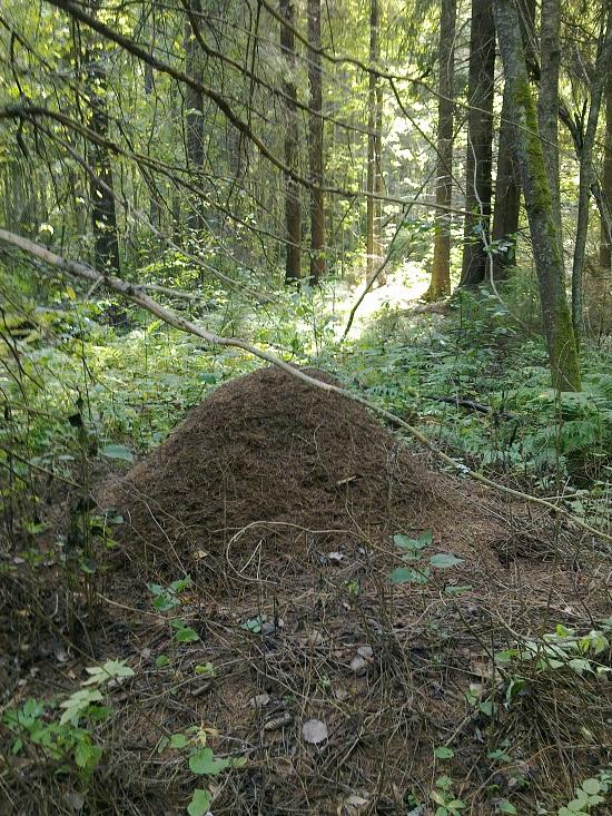 Большой муравейник в осеннем лесу