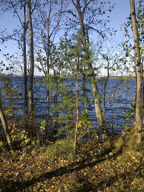 Осенний берег озера Сиверское в парке Русский Север