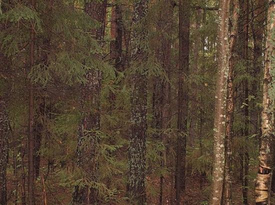Осенний лес - национальный парк