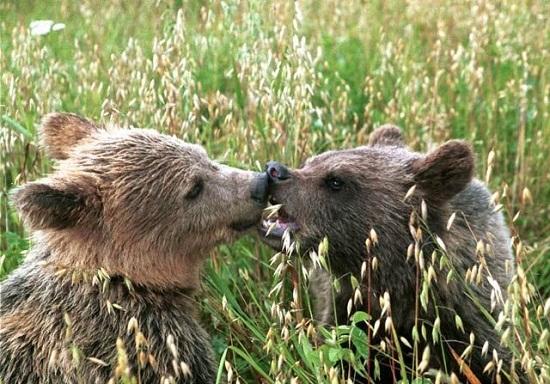 Животные в особо охраняемой природной зоне