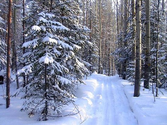 Русский Север - парк в Вологодской области зимой