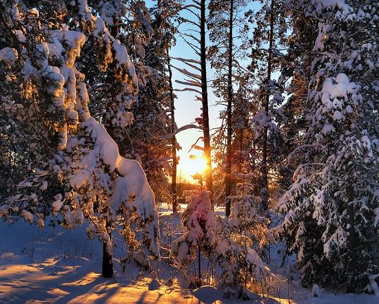 Зимний лес, деревья зимой