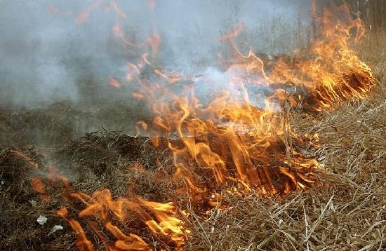 Поджог сухой травы приводит к лесным пожарам
