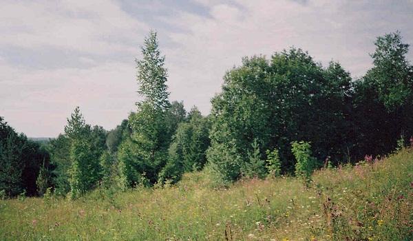 Гора Цыпина в Вологодской области
