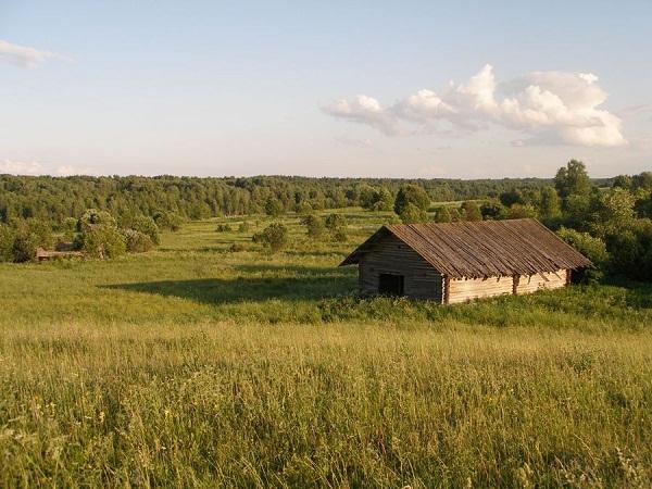 На окраине Шалго-Бодуновского леса
