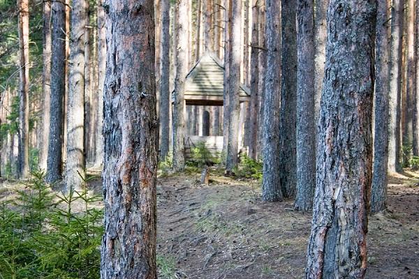 Смотровая площадка в Сокольском бору