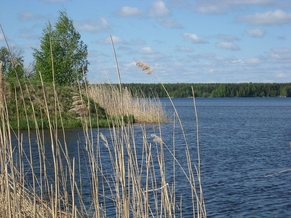 На берегу Шекснинского водохранилища