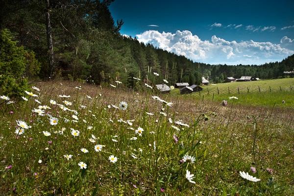 Лето в национальном парке