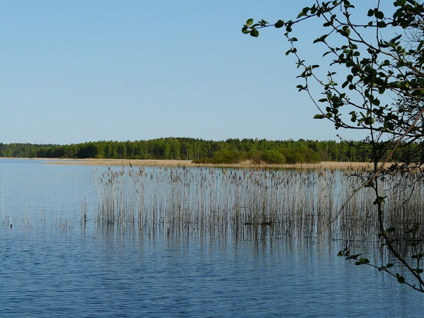 На Зауломском озере (Фото: Е.Сорокина)
