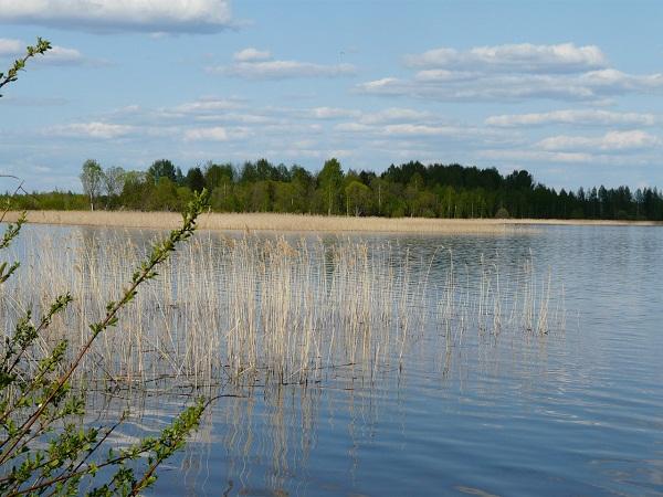 Озеро (Фото: Е.Сорокина)