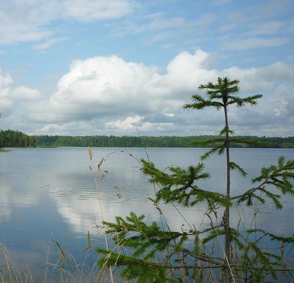 Вид с берега на озеро Палшемское